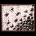 Arachnopholie