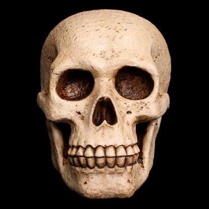 Mini crâne